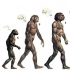 Turkey bans teaching of evolution – but science is more than a belief system