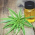 Are CBD oil effects instant? Will you notice the impacts of hemp straight away