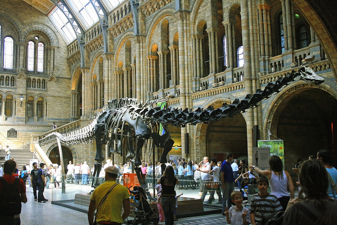 Diplodocus at the Natural History Museum Valdiney Pimenta/flickr, CC BY