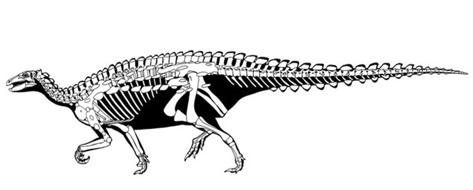 Scelidosaurus Gregory S Paul, Author provided