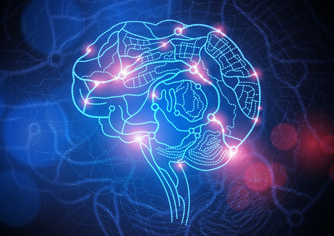 How does brain activity change while learning languages? Brain image via www.shutterstock.com
