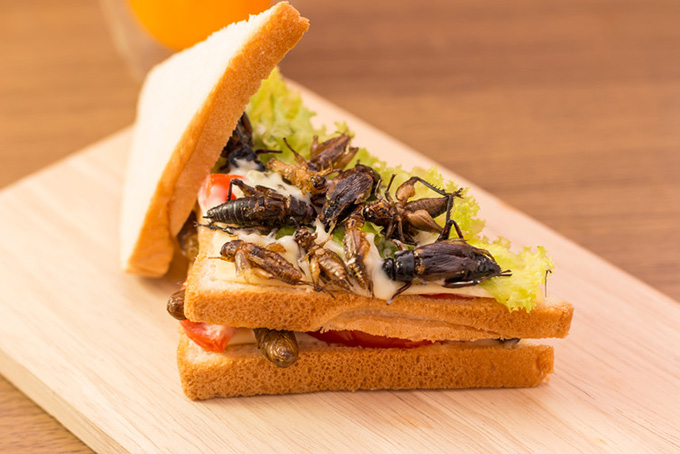 Insect sandwich, anyone? shutterstock.com